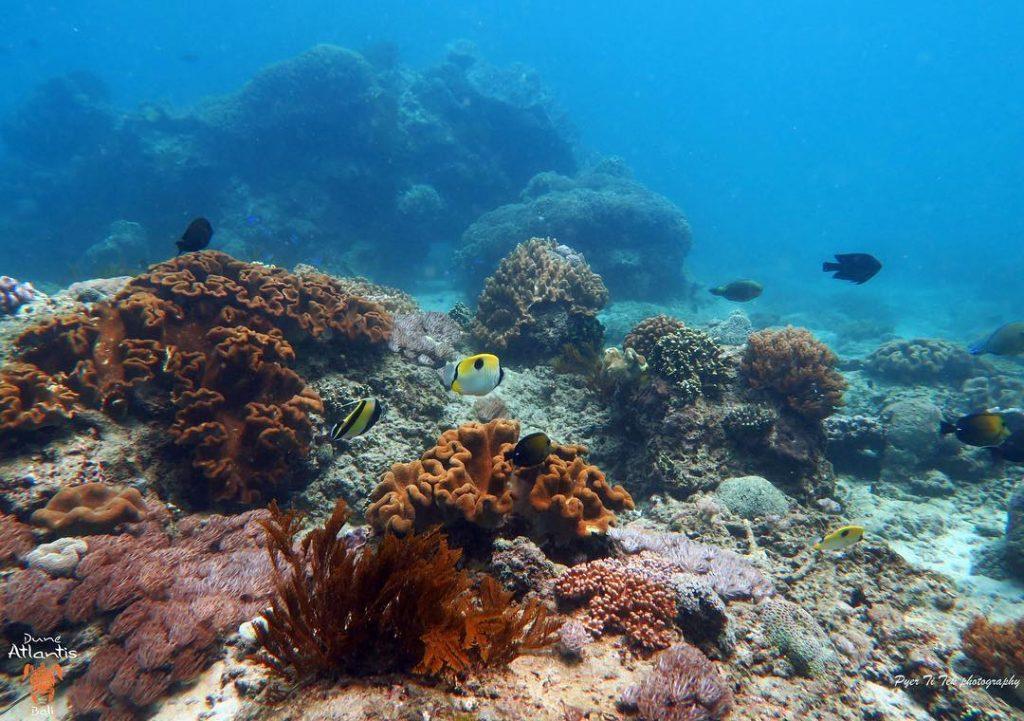 Goûtez la beauté de la plongée à Bali