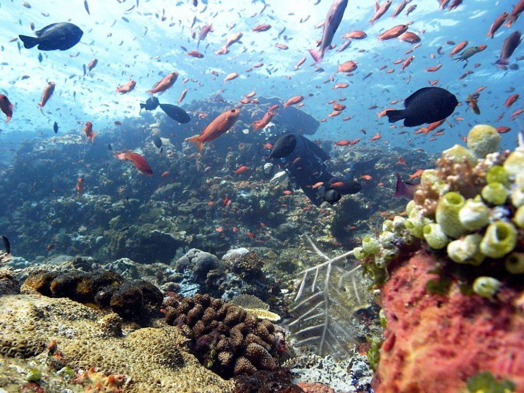 Les merveilles que vous aurez à découvrir lors d'une plongée bali