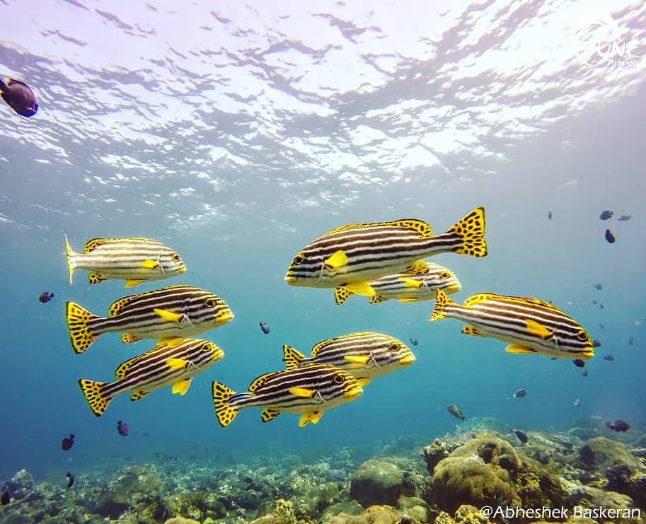 Préparez-vous à la plongée Bali Tulamben: une activité incontournable pour votre séjour à Bali