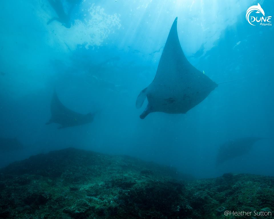 En Indonésie, nager avec une raie manta bali