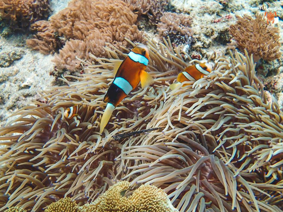 Quelle est la combinaison idéale pour plongée à Bali?