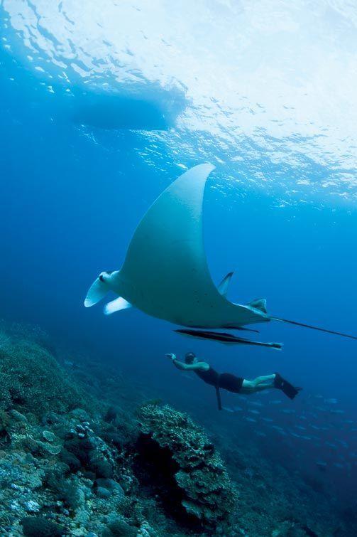 Raie Manta Bali: Incroyable et Majestueuse