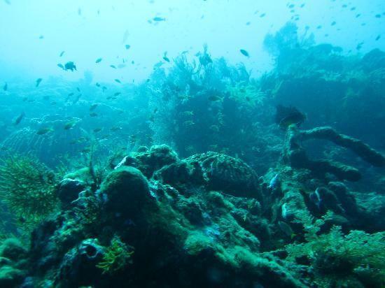 Amed plongée- pourquoi ce site est-il formidable pour les plongeurs?