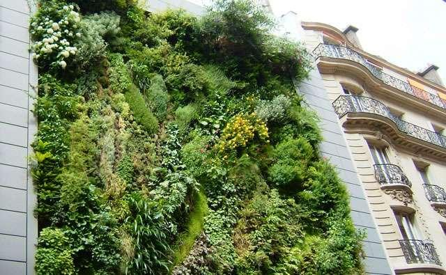 Création le jardin dans la maison, le projet intéressant