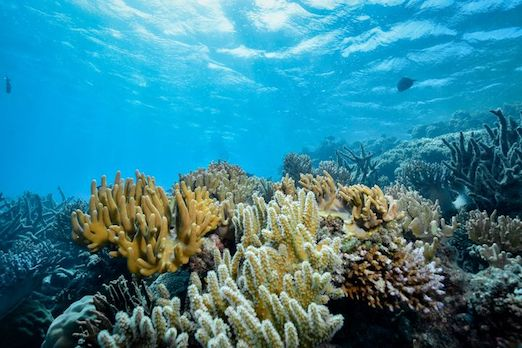 tulamben plongée
